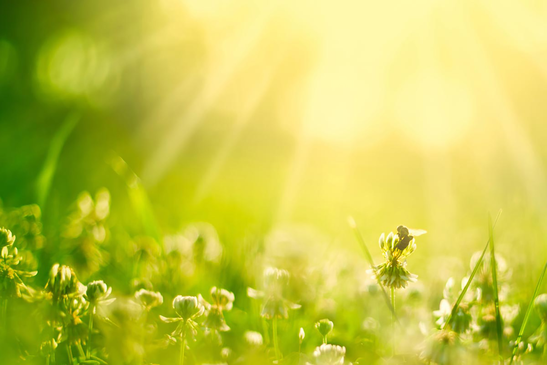 Gartenbau Erding gartenbau erding hausdesign pro